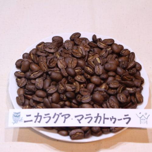 ドリップコーヒー  ニカラグア・マラカトゥーラ
