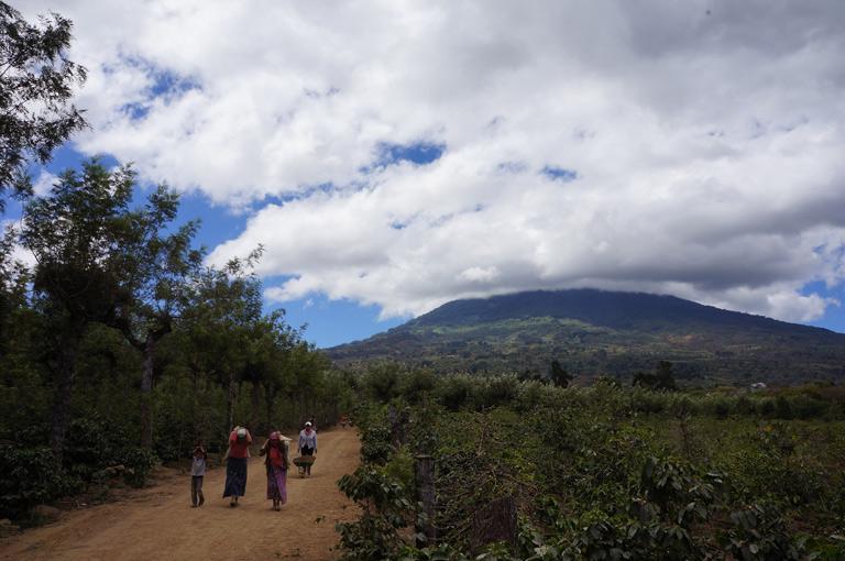 グァテマラ産地